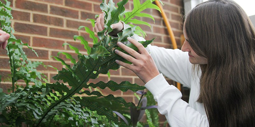 a biology student working in the greenhouse