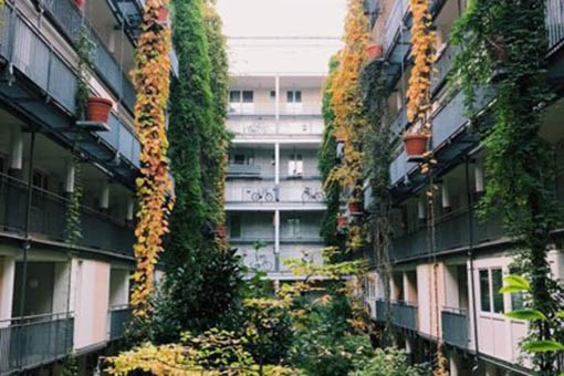 Apartment balconies covered in vines