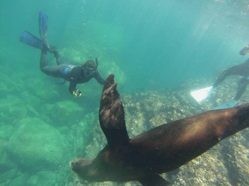 Student taking a photo of a sea lion