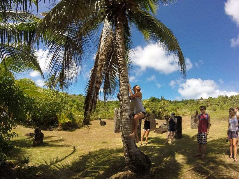 Student climbing a palm tree while others watch