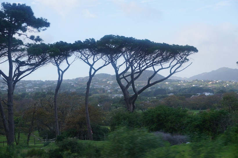 Trees in Africa