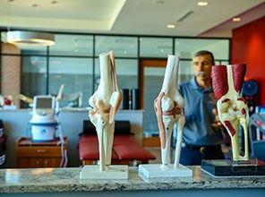 Models of human bones and muscles