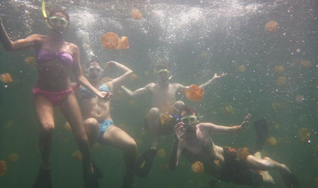 students snorkeling with jellyfish