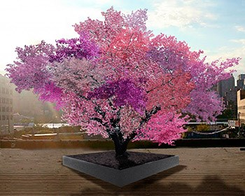 Tree of 40 Fruit honors Maxey's 10th Anniversary